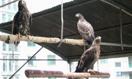 Партійці Львова допоможуть «червонокнижним» орлам