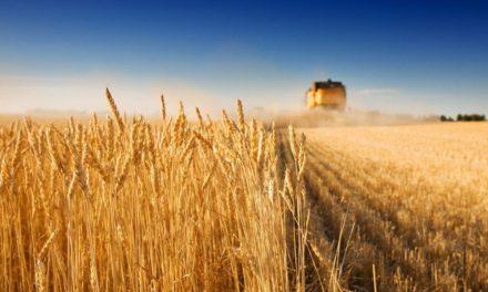Михайло Цимбалюк: Формула успіху українського села – це підтримка фермерства