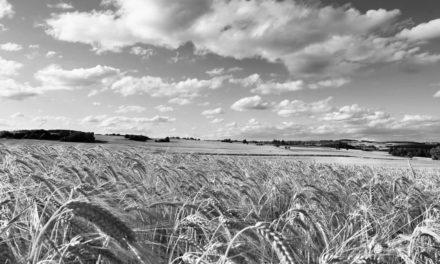 Юлія Тимошенко: Сьогодні День працівників сільського господарства